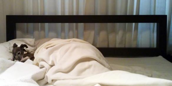 emma bed